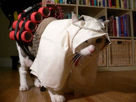 Cat dressed as a suicide bomber