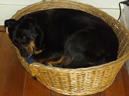 Maggie in her basket