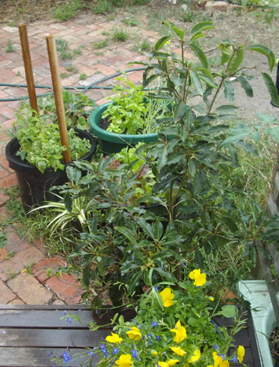 plants in pots on a brick paved area