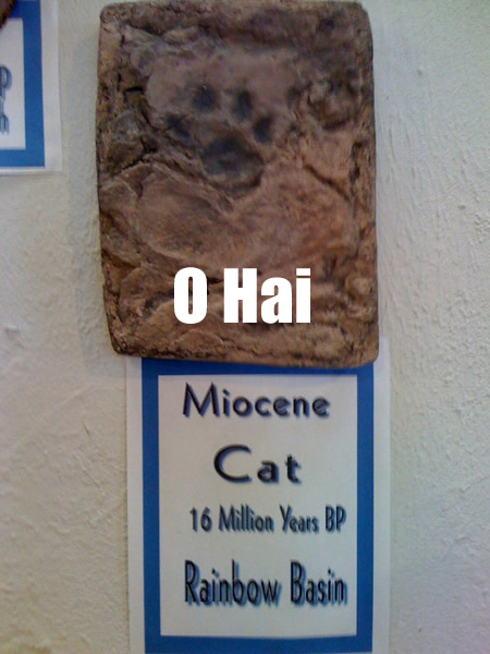 Miocene fossil of cat footprint with LOLcat caption O HAI