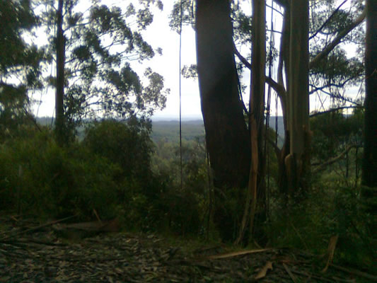 Looking north from the Grand Ridge Road, somewhere between Tarra Bulga NP and Gunyah