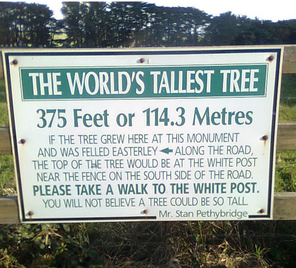 Painted sign on fence explaining Site of Tallest Tree's history.