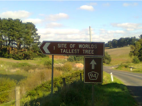 "Road sign - ""Site of World's Tallest Tree"""