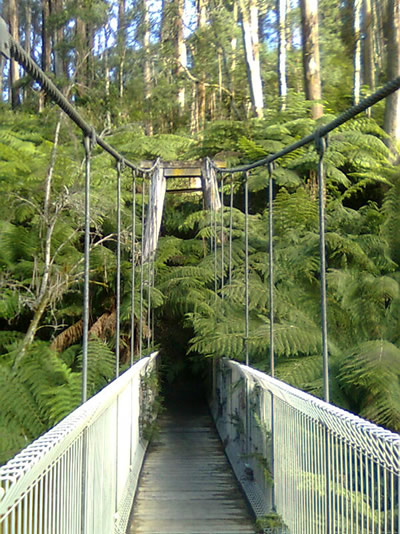 Swing bridge at Tarra Bulga NP