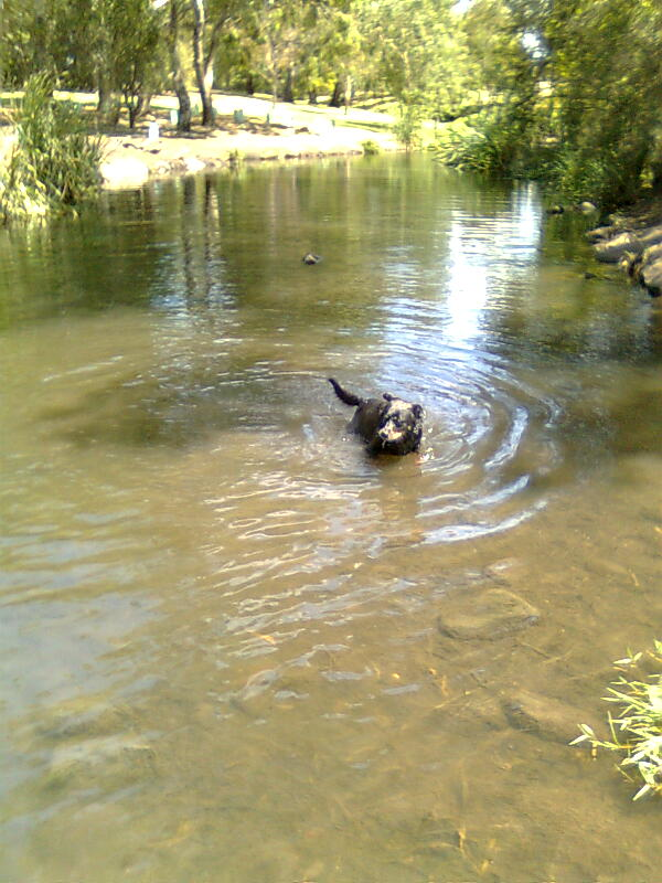 Maggie swimming in the frog pond in the Park