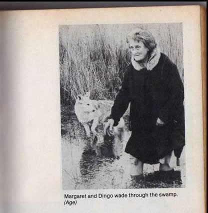 Picture of Margaret Clement of Tullaree wading through the swamp with her dog, Dingo.