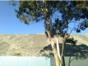 A big pale grey pile of recycled plastic with a gum tree